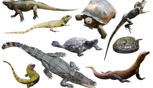 おすすめの爬虫類ユーチューバー