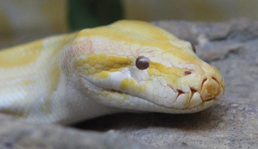 蛇の顔は意外と可愛い。慣れると全然キモくない、ヘビの魅力とは?