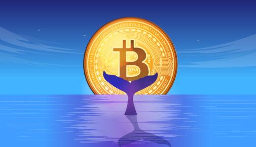 ビットコインのクジラが居るならイルカやサメも居るのか?