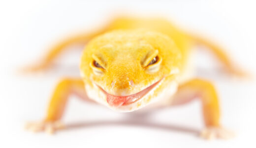トカゲなどの爬虫類に喜怒哀楽の感情は無いって本当なの?ペット飼育者としてはあるようにも思えますが・・・